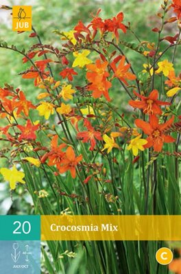 Crocosmia Montbrécia mix